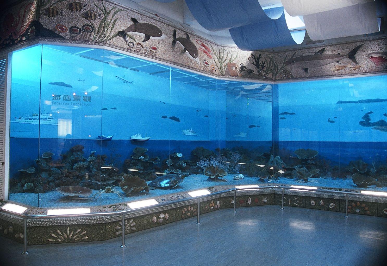 澎湖海洋資源館(B館)展示一景